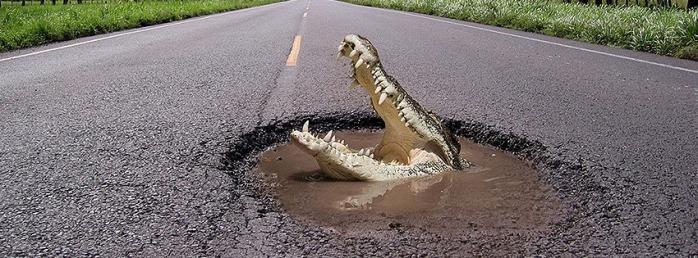 crocodile-20120516152653