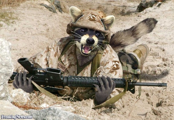 raccoon-soldier-with-a-gun-22778