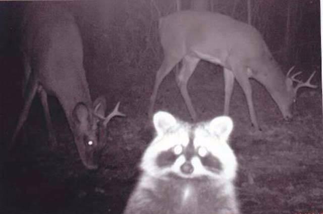 i_night_animals_002_5673d58c4430f