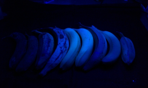 small_bananas_blue