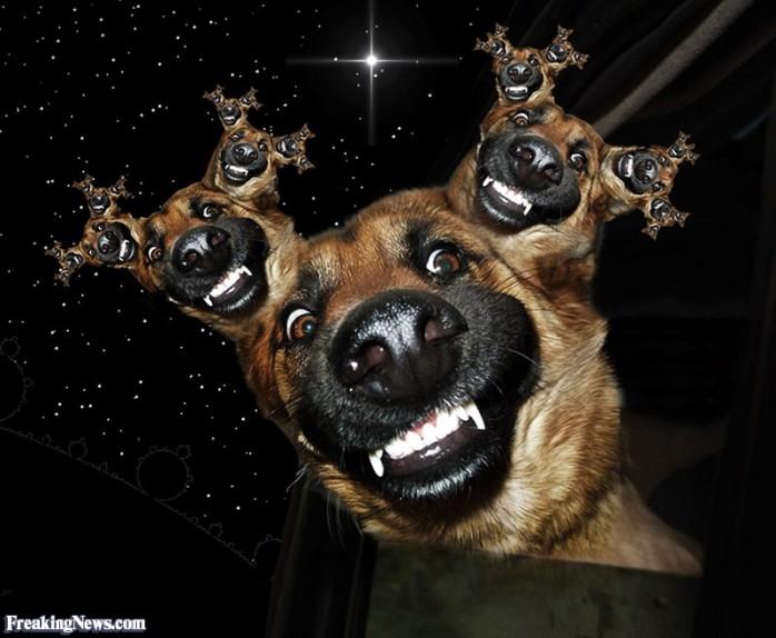 fractal-dog-104725