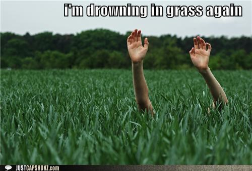grass drowning