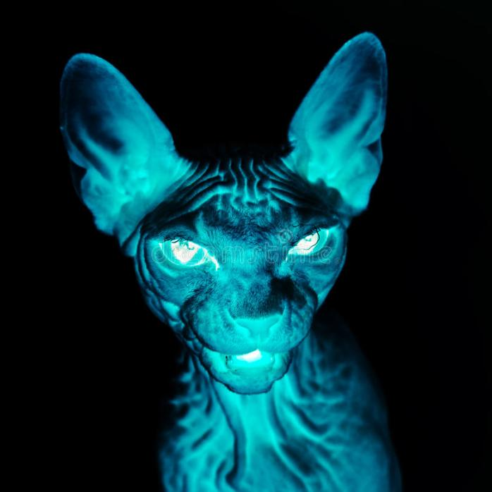 x-ray-sphynx-cat-portrait-fear-horror-picture-46554866